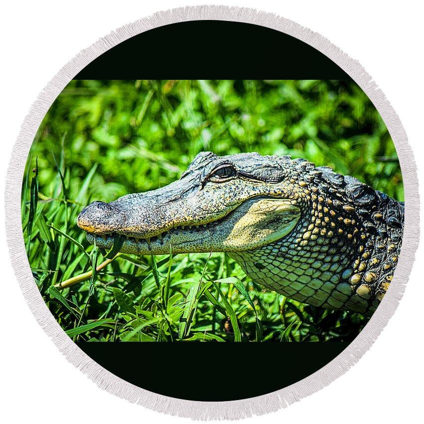 Alligator Round Beach Towel featuring the photograph Alligator by Brandon Stansbury