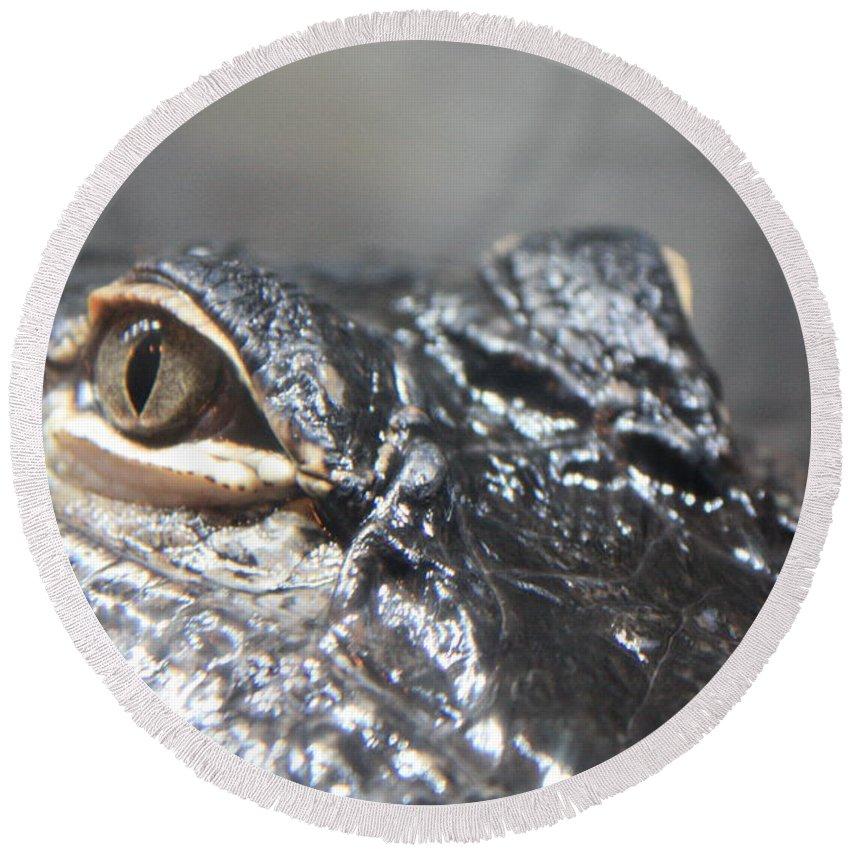Alligator Round Beach Towel featuring the photograph Alligator Eye by Carol Groenen