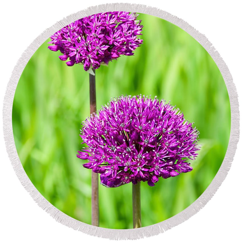 Alliums Round Beach Towel featuring the photograph Alliums by Susie Peek