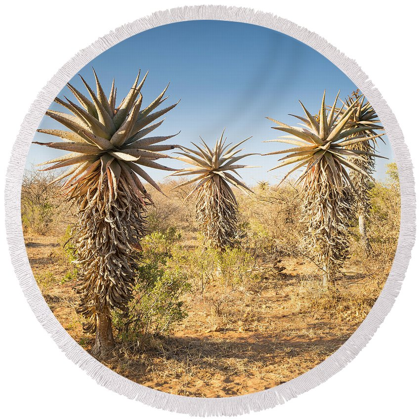 Africa Round Beach Towel featuring the photograph Aloe Vera Trees Botswana by Tim Hester