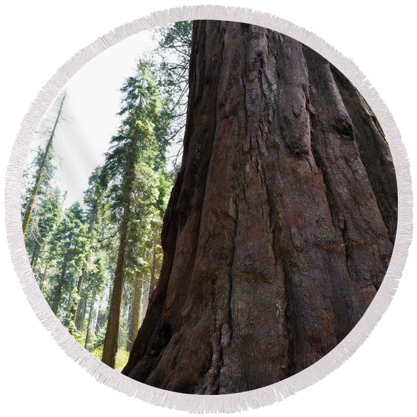 Sequoia National Park Round Beach Towel featuring the photograph Alta Vista Giant Sequoia by Kyle Hanson