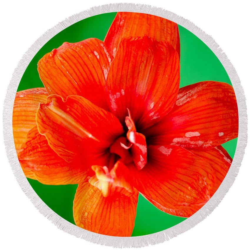 Amaryllis Round Beach Towel featuring the photograph Amaryllis Contrast Orange Amaryllis Flower Appearing To Float Above A Deep Green Background by Andy Smy