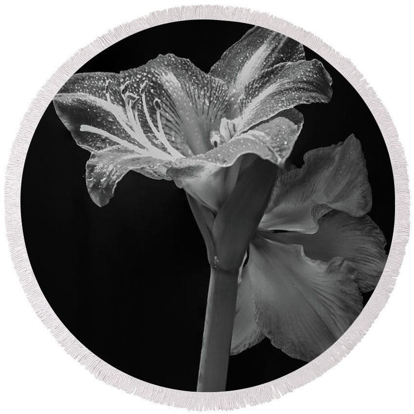 Amaryllis Round Beach Towel featuring the photograph Amaryllis, Monochrome by Aashish Vaidya