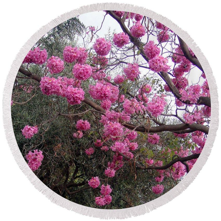 Amazing Pink Flower Tree February In California Round Beach Towel