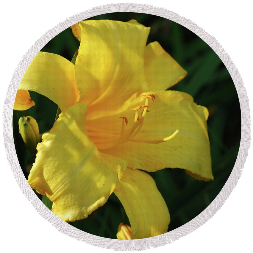 Lily Round Beach Towel featuring the photograph Amazing Yellow Lily Flowering In A Garden by DejaVu Designs