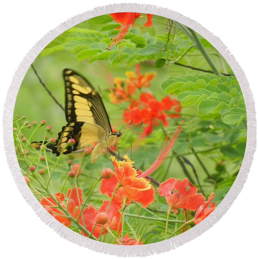 Butterfly Round Beach Towel featuring the photograph Amazonia Butterfly by Rhonda Allbrandt