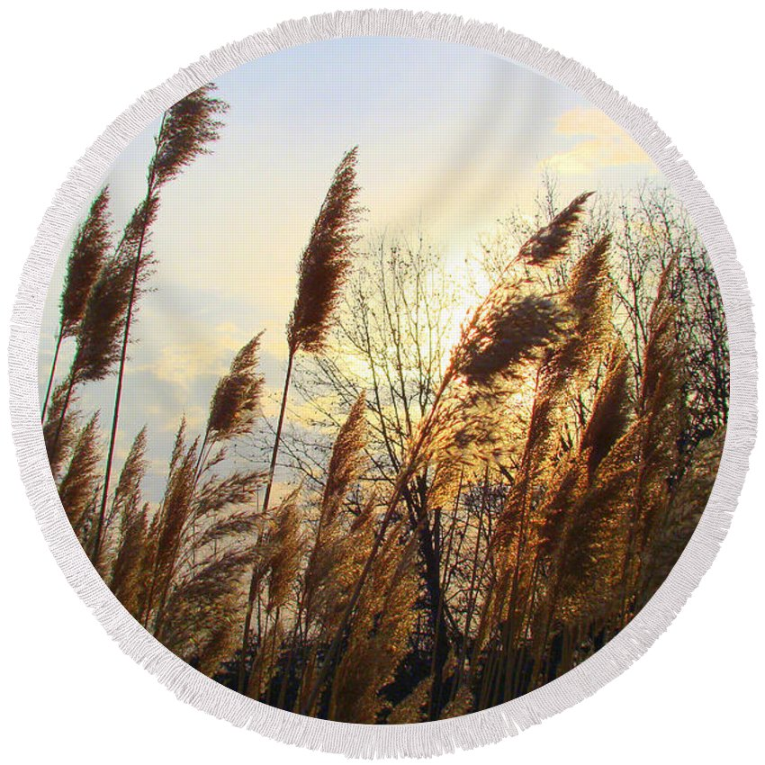 Pampasgrass Round Beach Towel featuring the photograph Amber Waves Of Pampas Grass by J R Seymour