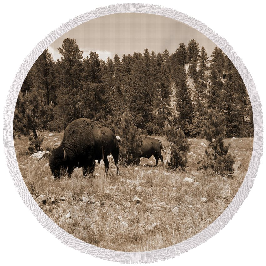Bison Round Beach Towel featuring the photograph American Bison Vintage by Pamela Peters