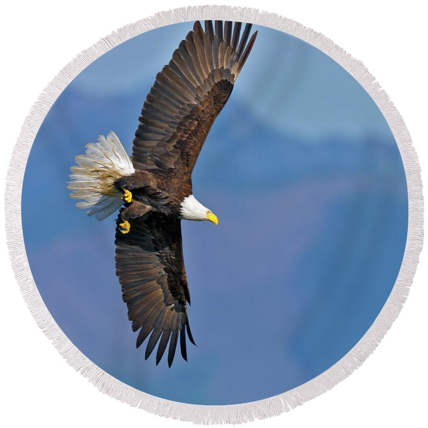 American Round Beach Towel featuring the photograph American Blad Eagle On The Wing by Gary Langley