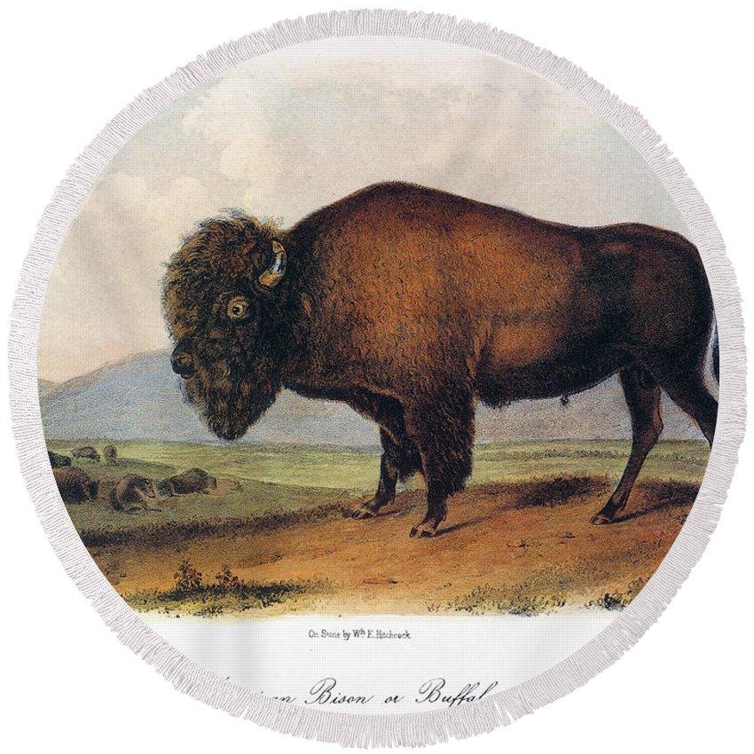 1846 Round Beach Towel featuring the photograph American Buffalo, 1846 by John James Audubon
