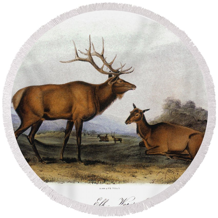 1846 Round Beach Towel featuring the photograph American Elk, 1846 by Granger