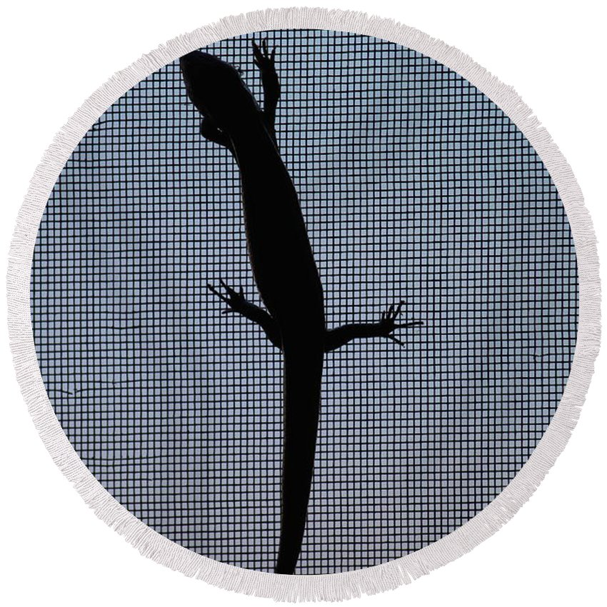 North Round Beach Towel featuring the photograph American Five-lined Skink by Nicholas Miller