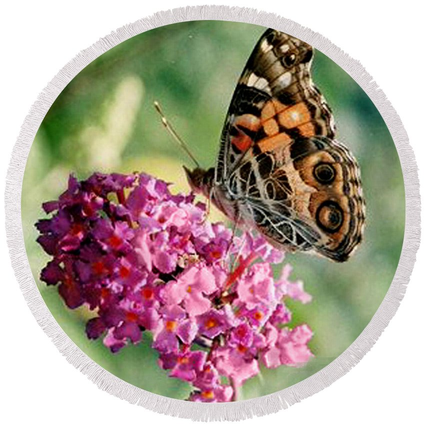 Butterfly Round Beach Towel featuring the photograph American Painted Lady by Donna Brown