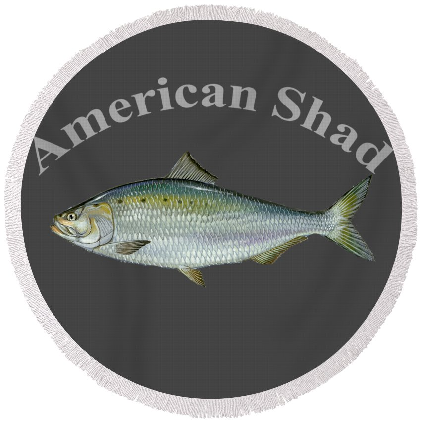 American Shad Round Beach Towel featuring the digital art American Shad by T Shirts R Us -