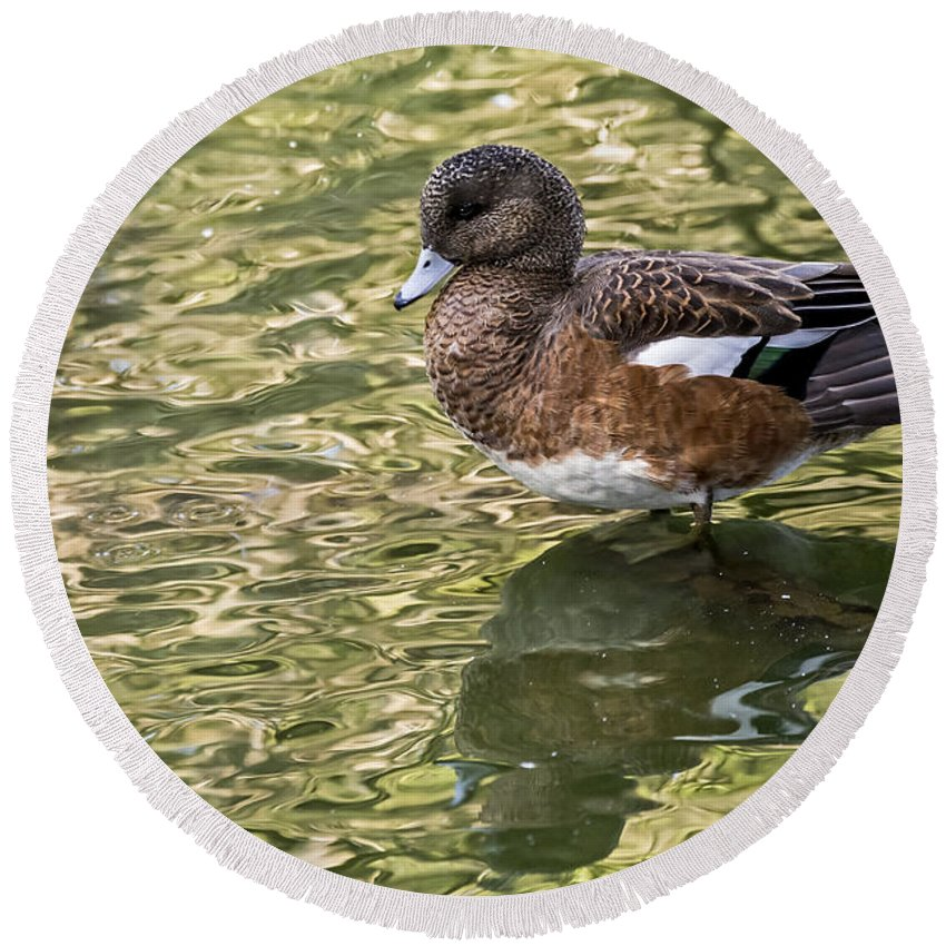 Bird Round Beach Towel featuring the photograph American Wigeon In Autumn by Kate Brown
