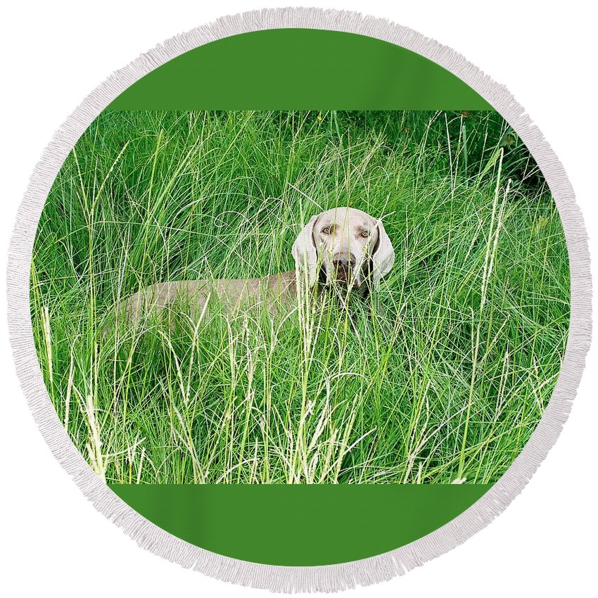 Grass Round Beach Towel featuring the photograph Among The Grasses by Cindy New