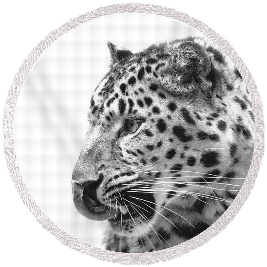 Amur Leopard Round Beach Towel featuring the photograph Amur Leopard by Stephanie McDowell