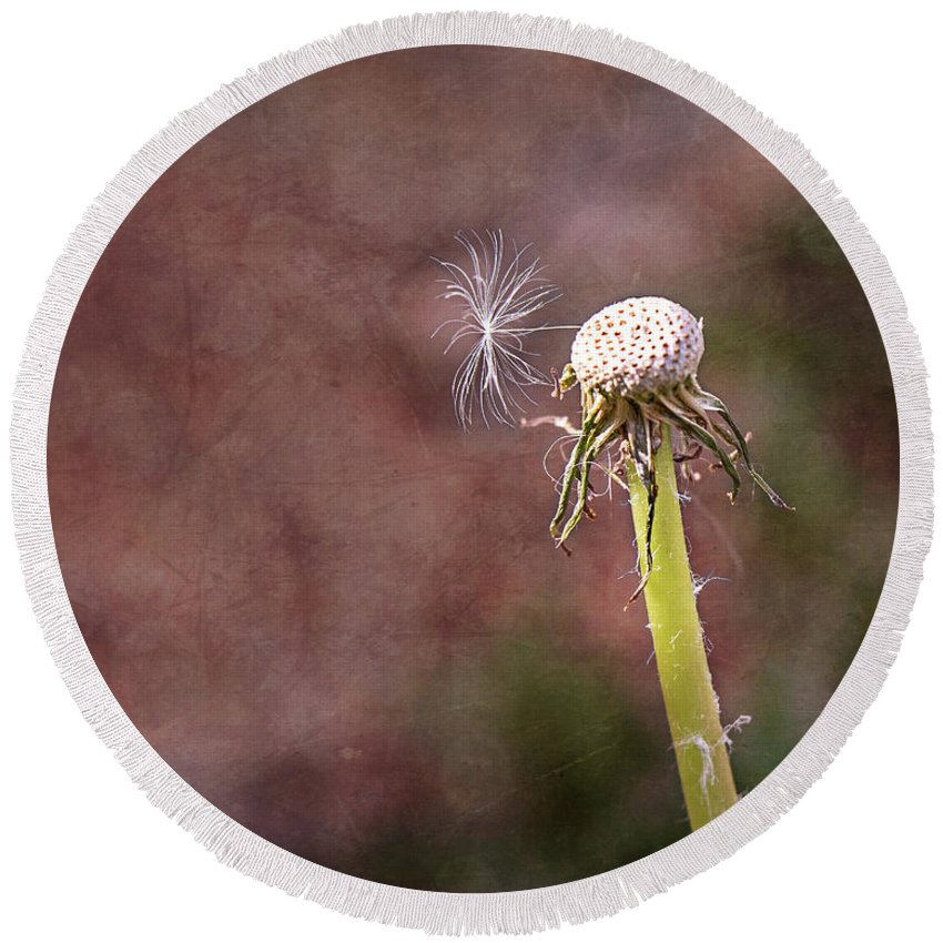 Dandelion Round Beach Towel featuring the photograph An Adventure Awaits by Jennifer Grossnickle