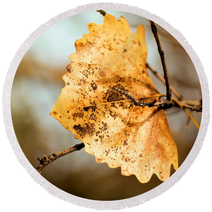 Leaf Round Beach Towel featuring the photograph An Autumn Leaf Suspended by Jeff Swan