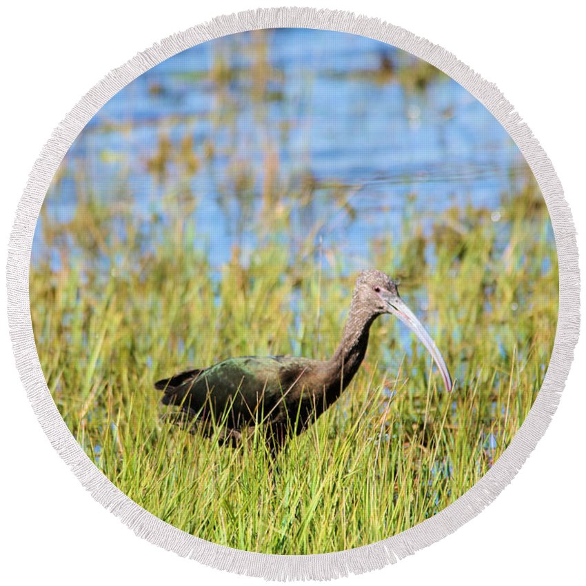 Ibis.bird. Fowl Waterfowl. Animal. Wildlife. Critter. Creature. Life. Living Things. Round Beach Towel featuring the photograph An Ibis In The Grass by Jeff Swan