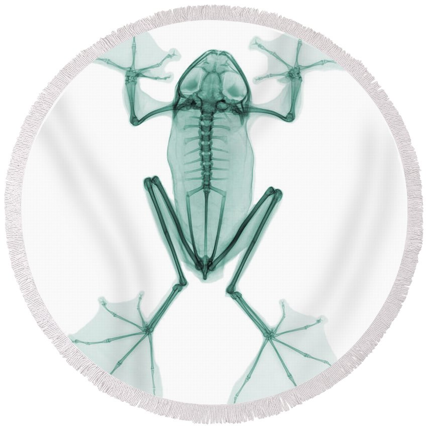 X-ray Round Beach Towel featuring the photograph An X-ray Of A Flying Frog by Ted Kinsman