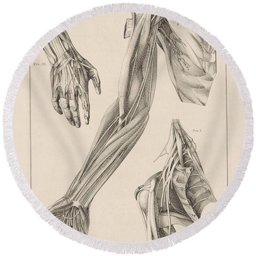 Tolle Anatomie Der Strecksehnen Der Hand Bilder - Menschliche ...