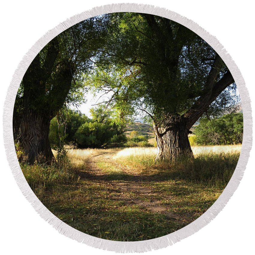 Willows Round Beach Towel featuring the photograph Ancient Willows #1 by Carol Milisen