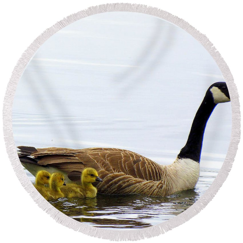 Geese Round Beach Towel featuring the photograph And The Littlest One Shall Lead The Way by Lori Pessin Lafargue