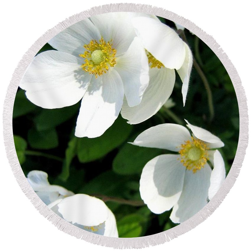 Anemones Round Beach Towel featuring the photograph Anemones by Will Borden