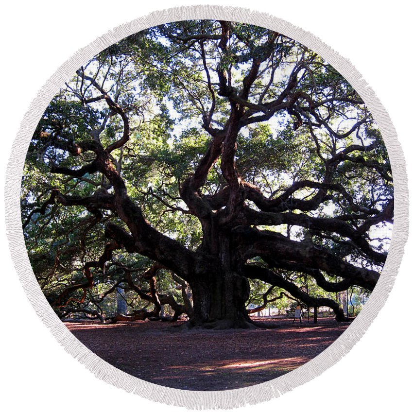 Photography Round Beach Towel featuring the photograph Angel Oak II by Susanne Van Hulst