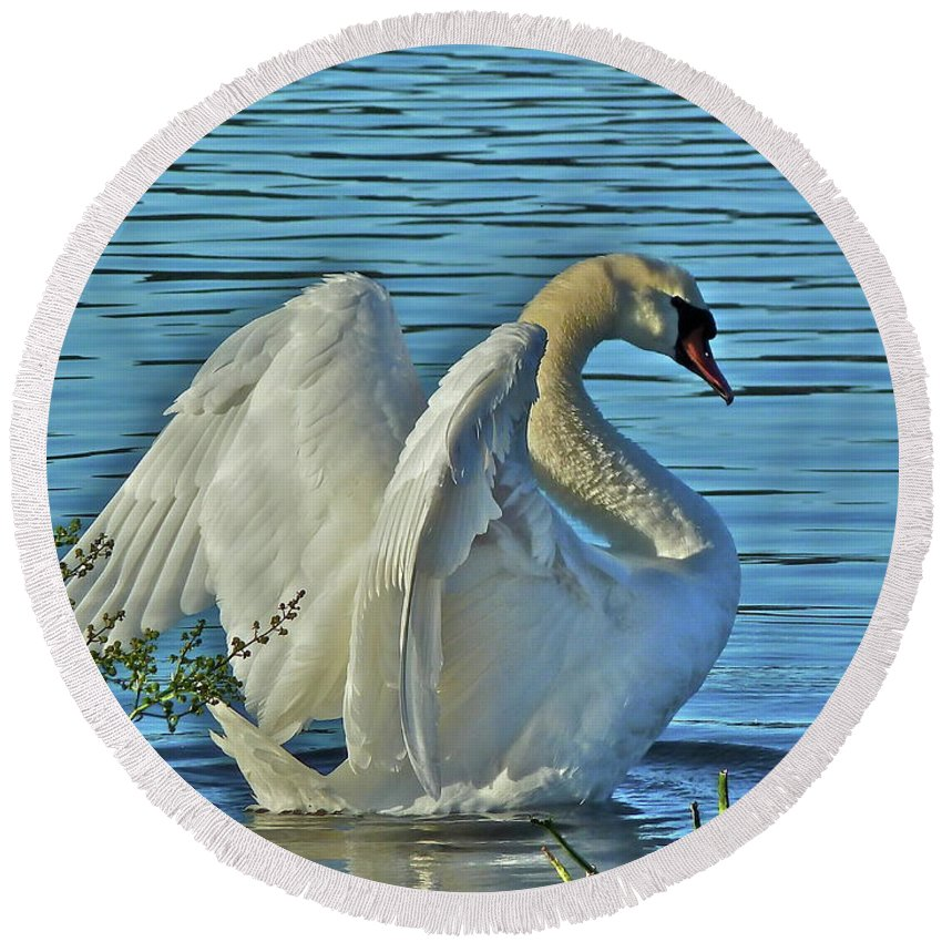 Swan Round Beach Towel featuring the photograph Angel Wings by Diana Hatcher