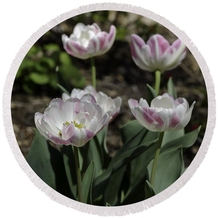 Flowers Round Beach Towel featuring the photograph Angelique Peony Tulips Squared by Teresa Mucha