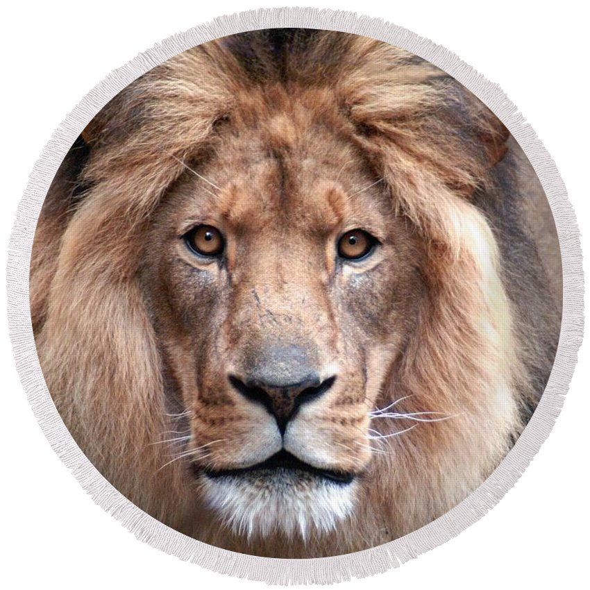 Lion Round Beach Towel featuring the photograph Angry by Bill Stephens