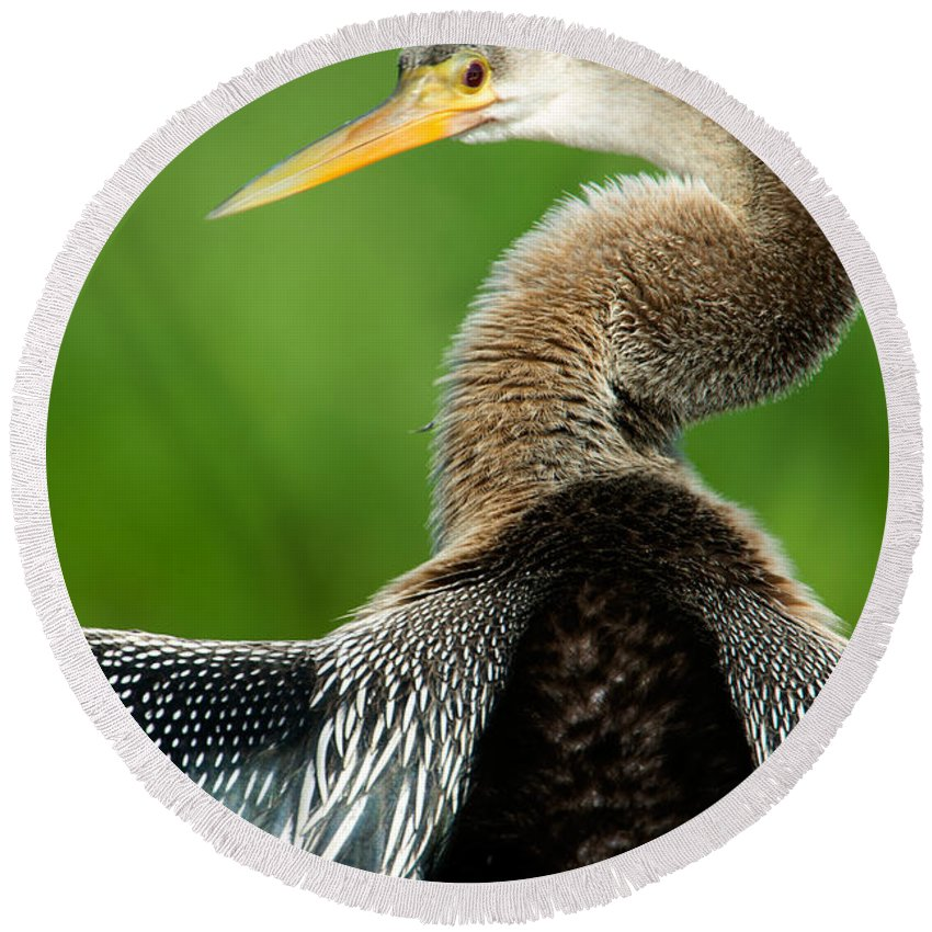 Photography Round Beach Towel featuring the photograph Anhinga Anhinga Anhinga, Pantanal by Panoramic Images