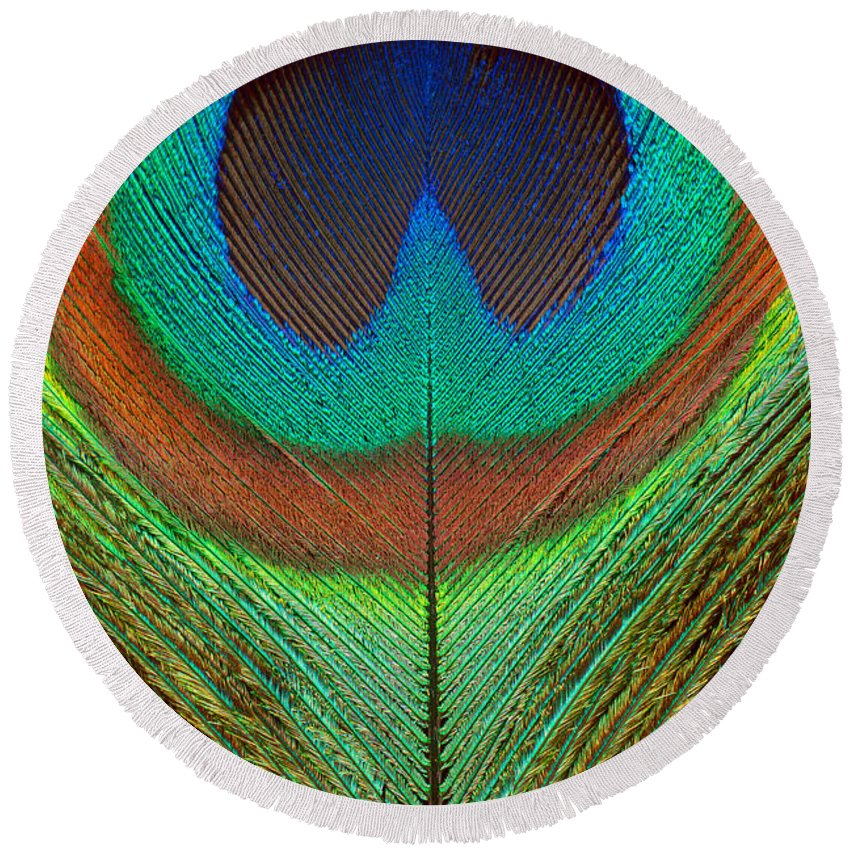 Avian Round Beach Towel featuring the photograph Animal - Bird - Peacock Feather by Mike Savad