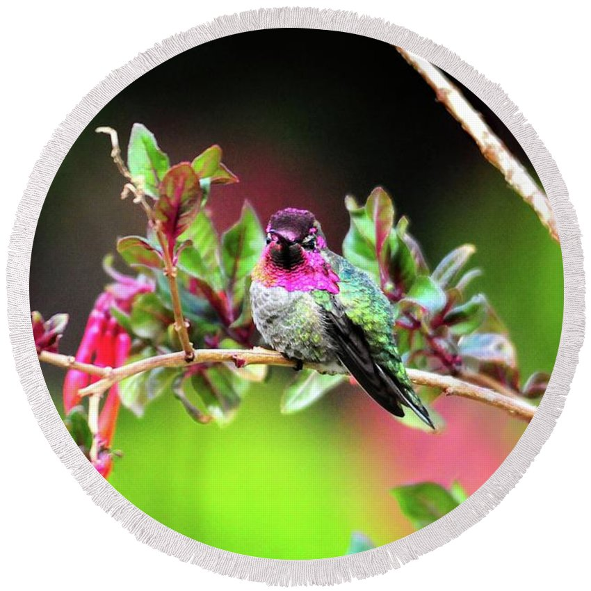 Anna's Hummingbird Round Beach Towel featuring the photograph Anna's In The Garden by Lynn Bauer