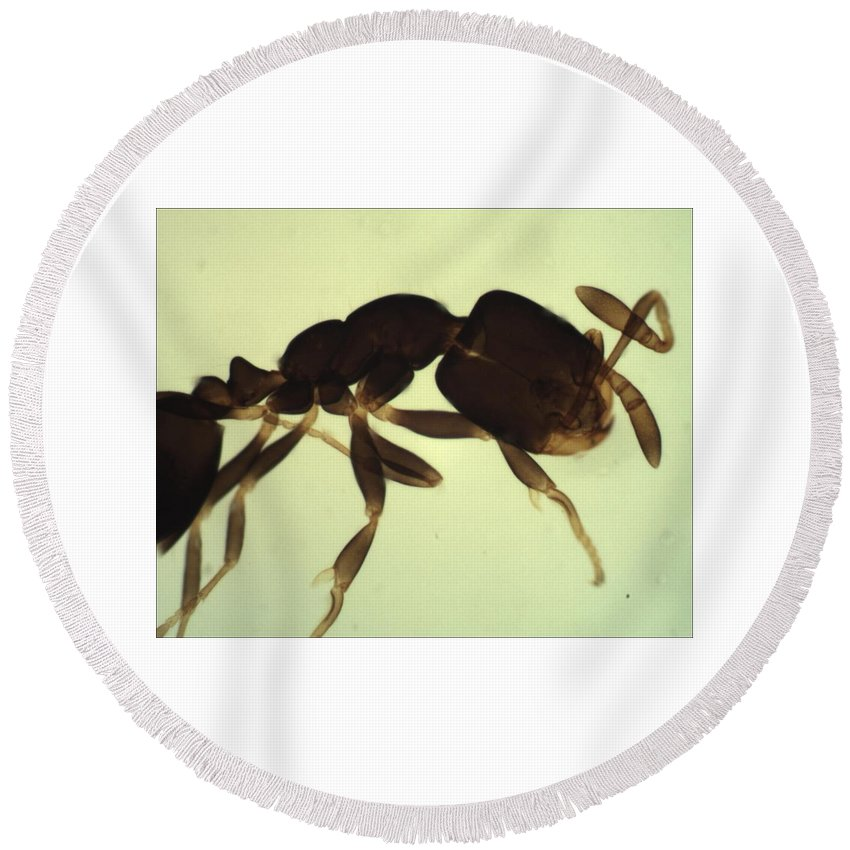 Ant Round Beach Towel featuring the photograph Ant by Calvin Franklin