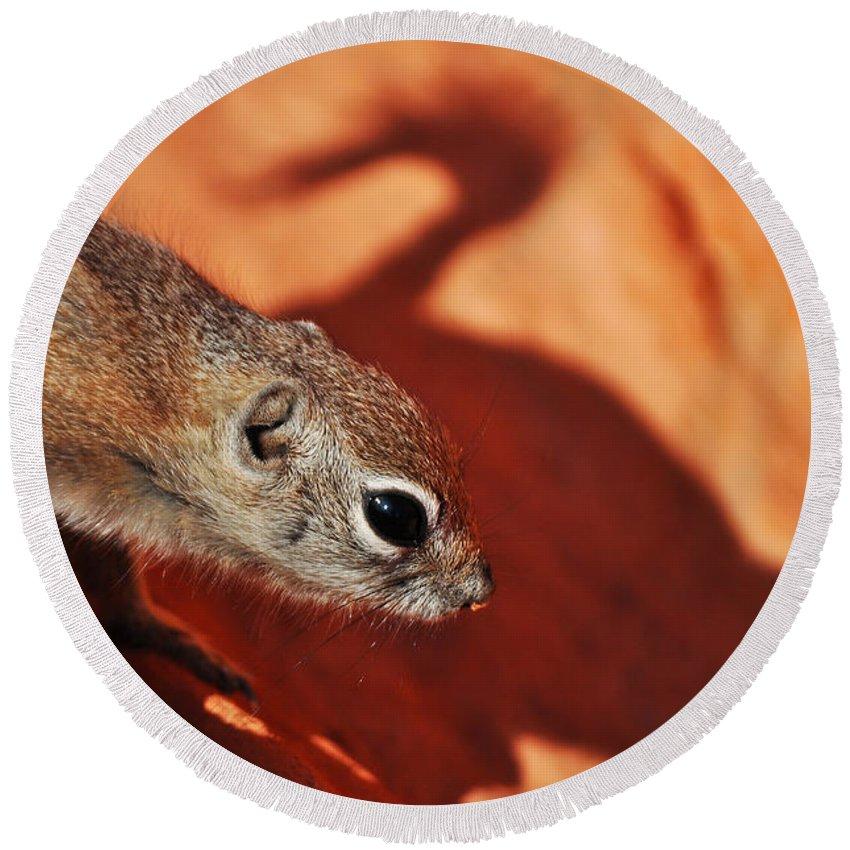 Antelope Ground Squirrel Round Beach Towel featuring the photograph Antelope Ground Squirrel II by Kyle Hanson