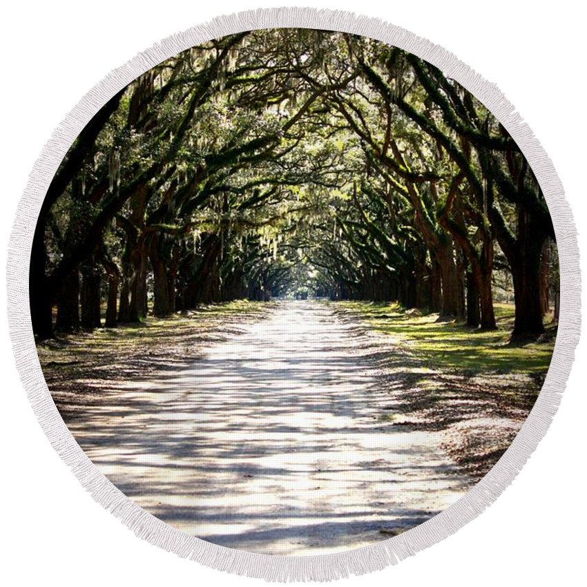 Live Oaks Round Beach Towel featuring the photograph Anticipation by Carol Groenen