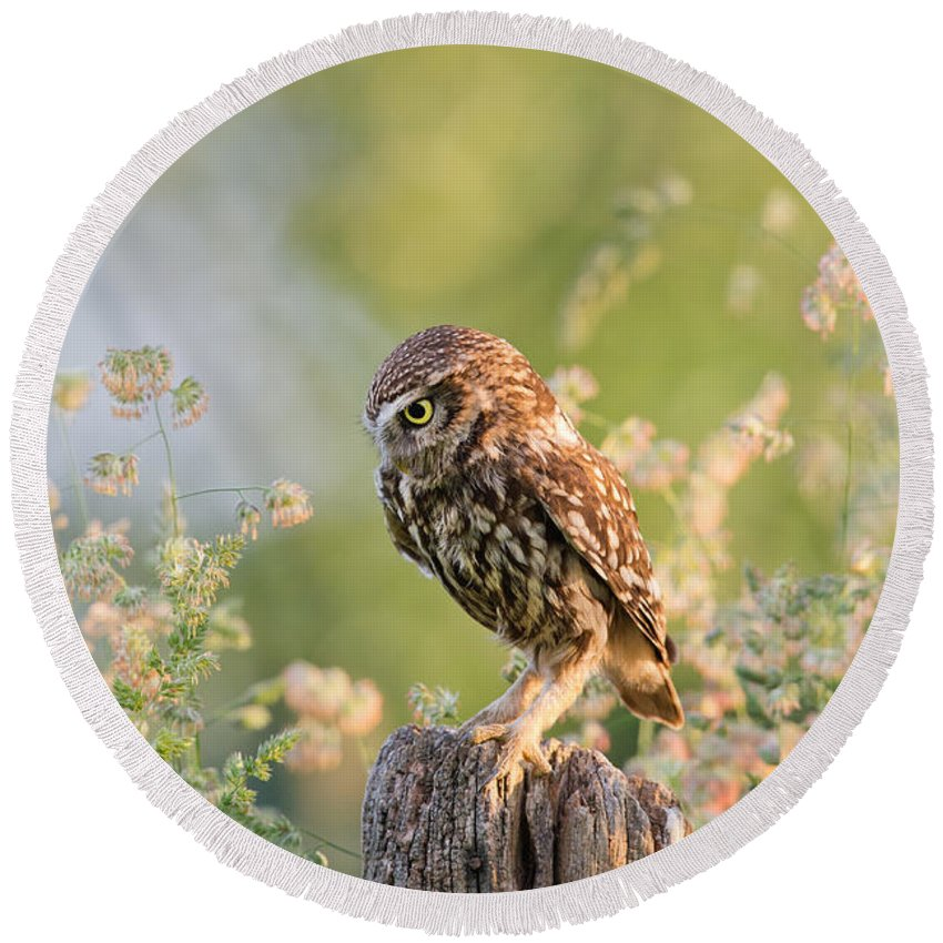 Little Owl Round Beach Towel featuring the photograph Anticipation - Little Owl Staring At Its Prey by Roeselien Raimond