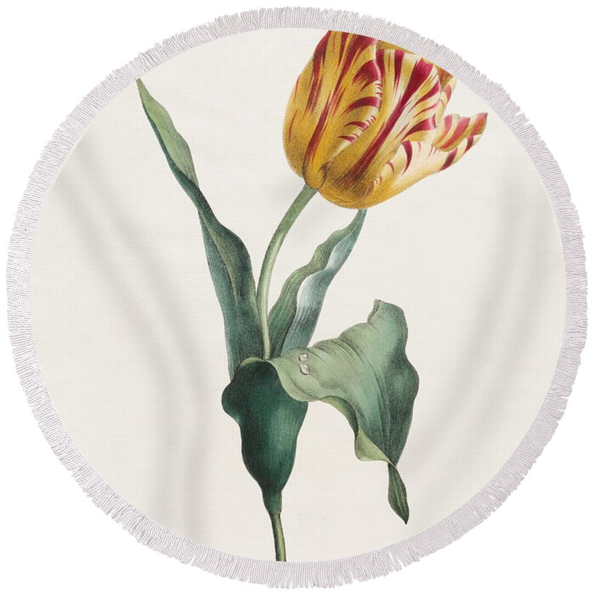 Tulip Round Beach Towel featuring the painting Antique Tulip Print by Valentine Bartholomew