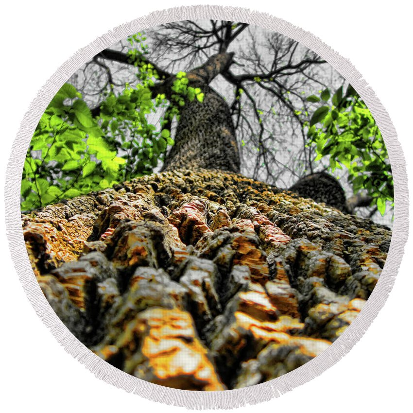 Tree Round Beach Towel featuring the photograph Ants View by Douglas Barnard
