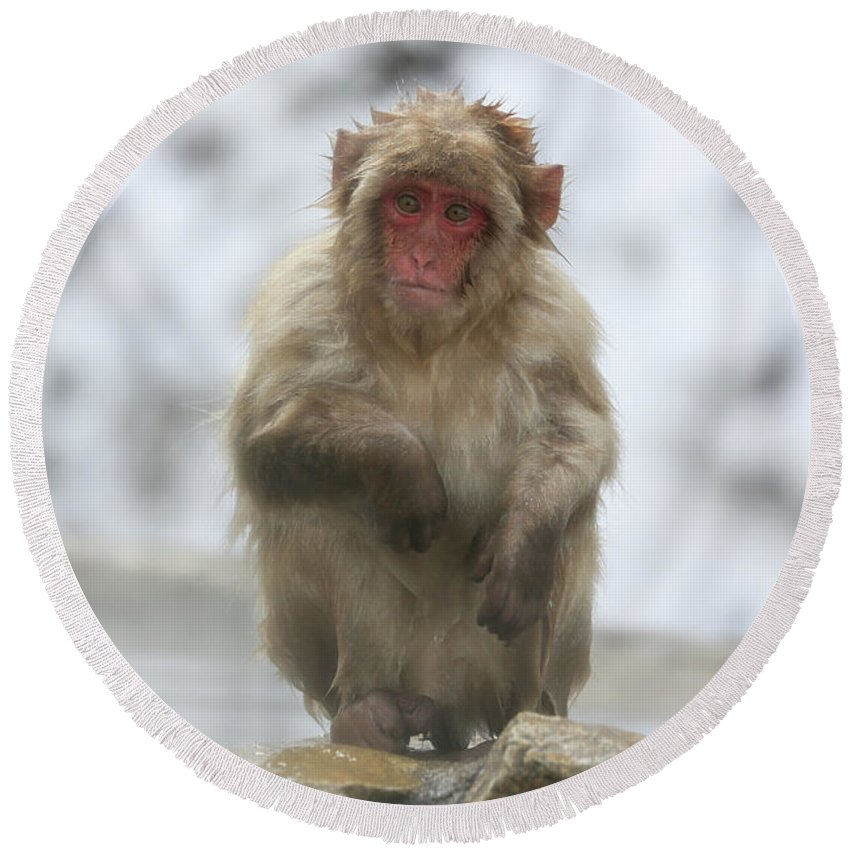 Snow Monkeys Round Beach Towel featuring the photograph Any Ideas by Leigh Lofgren