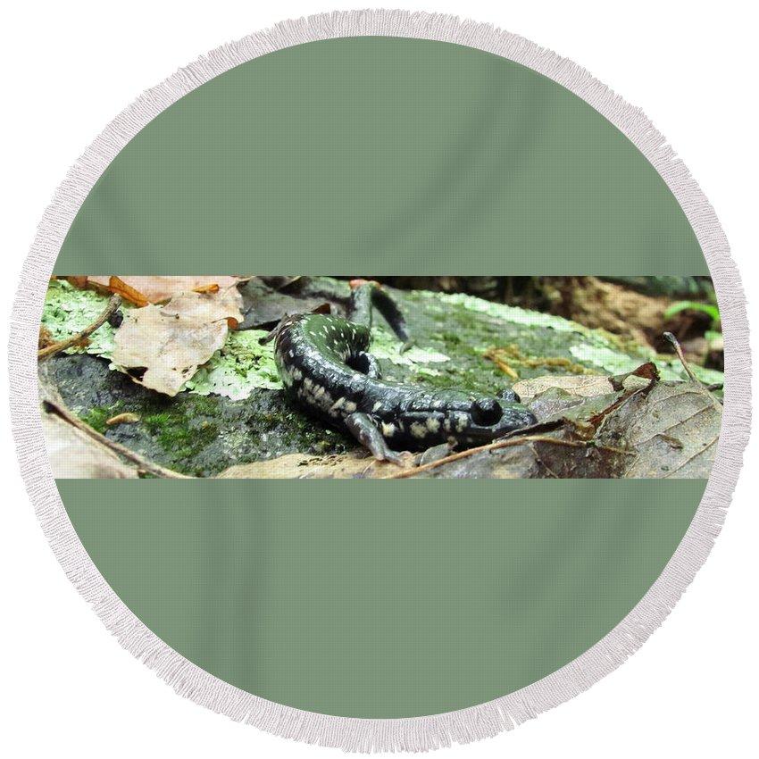 Slimy Salamander Photographs Slimy Salamander Canvas Prints Appalachian Mountain Nature Amphibian Photographs Biodiversity Round Beach Towel featuring the photograph Appalachian Slimy Salamander by Joshua Bales