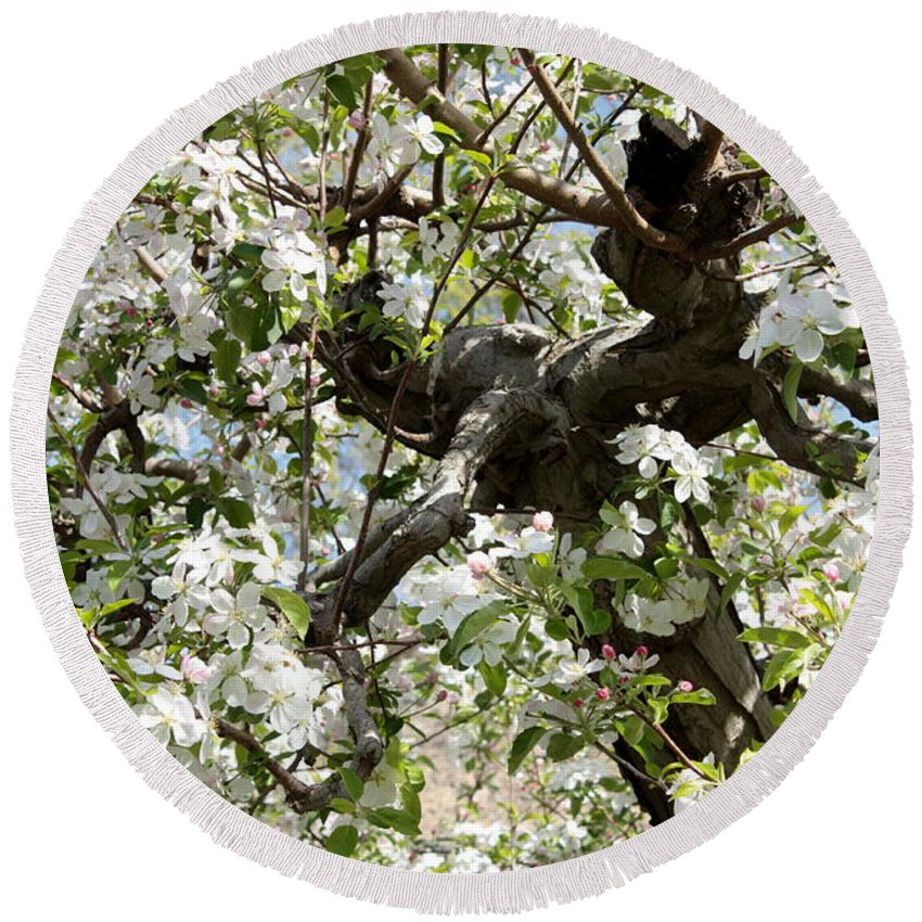Apple Blossoms Round Beach Towel featuring the photograph Apple Blossoms by Carol Groenen