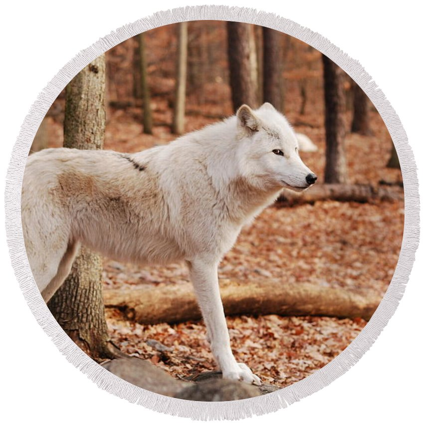 Wolf Round Beach Towel featuring the photograph Are You Talking To Me by Lori Tambakis