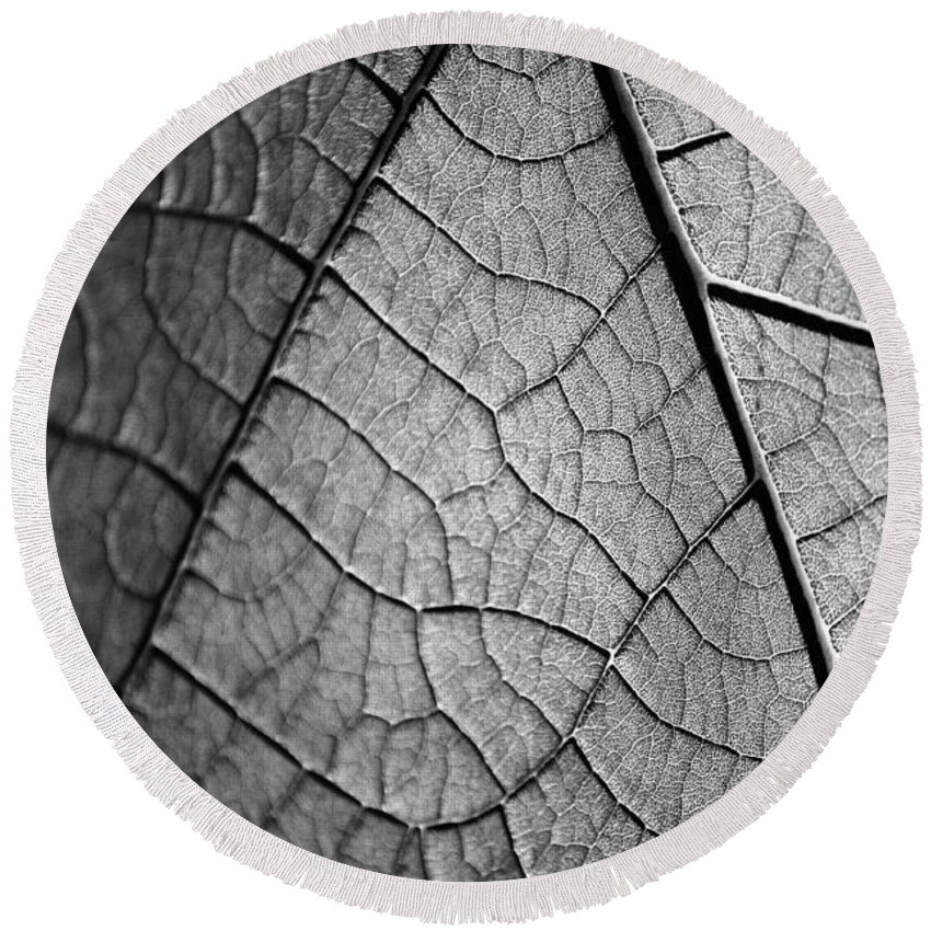 Garfield Park Conservatory Round Beach Towel featuring the photograph Aroid House Leaf by Kyle Hanson