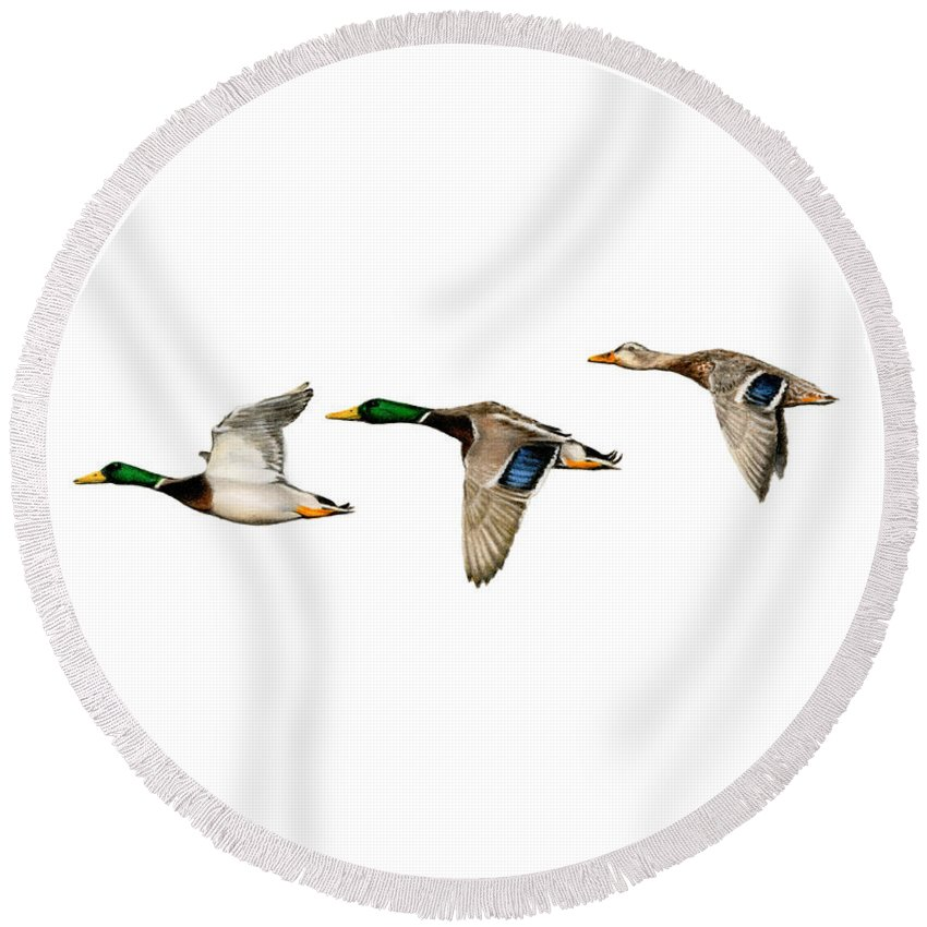 Canadian Geese Paintings Round Beach Towels