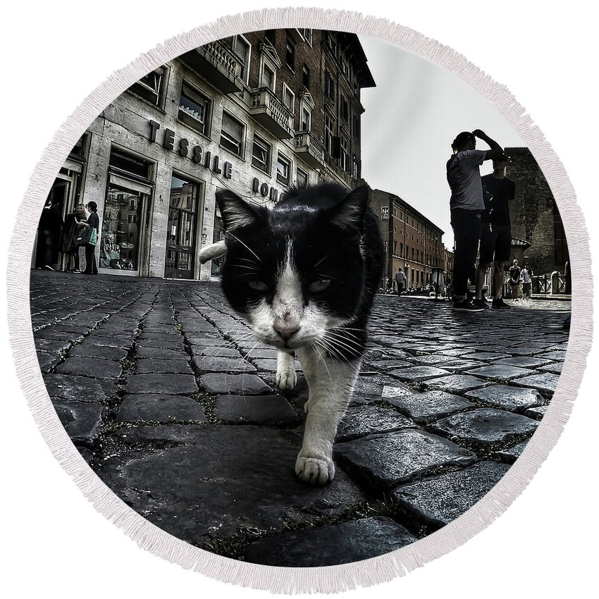 Cat Round Beach Towel featuring the photograph Street Cat by Nicklas Gustafsson