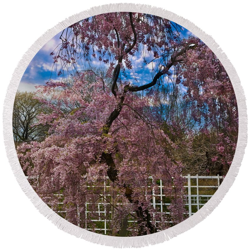 Asian Round Beach Towel featuring the photograph Asian Cherry In Blossom by Chris Lord